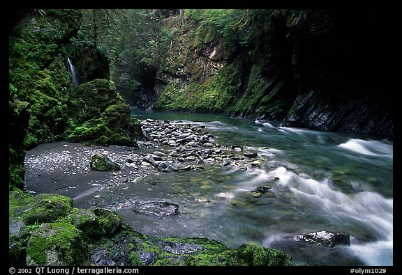 North fork of the Quinault river. Olympic National Park (color)