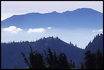 Wind-twisted trees and mountain ridges from Hurricane hill. Olympic National Park, Washington, USA.