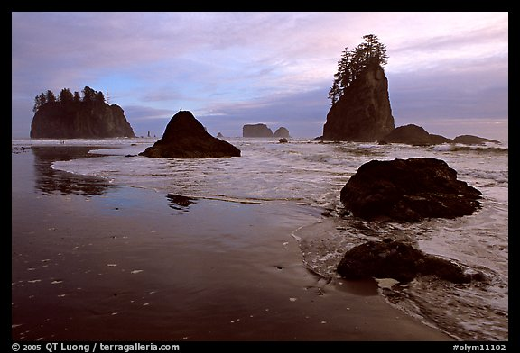 Beach with seastacks and reflections. Olympic National Park (color)