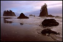 Beach with seastacks and reflections. Olympic National Park, Washington, USA.