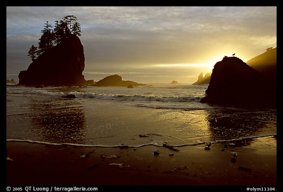 Beach, seastacks and rock with bird, Second Beach, sunset. Olympic National Park (color)