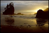 Beach, seastacks and rock with bird, Second Beach, sunset. Olympic National Park, Washington, USA. (color)
