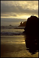 Rock with bird, Second Beach, sunset. Olympic National Park ( color)