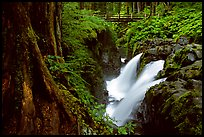 Sol Duc falls and footbridge. Olympic National Park, Washington, USA.
