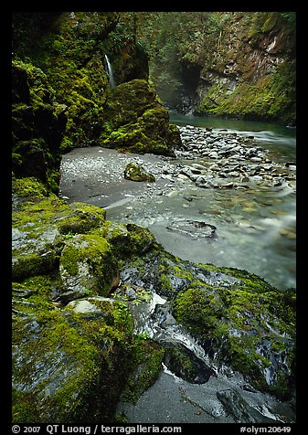 Mossy rocks and stream. Olympic National Park (color)
