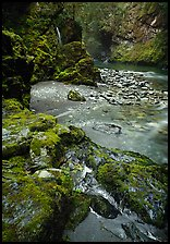 Mossy rocks and stream. Olympic National Park, Washington, USA. (color)