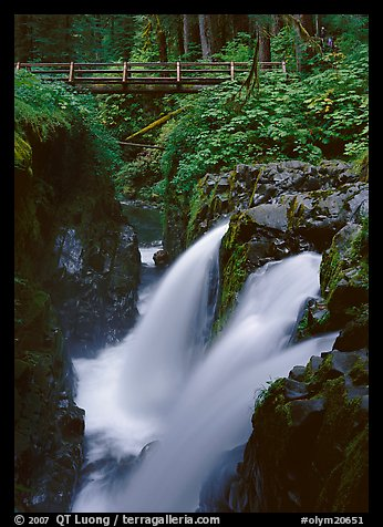 Sol Duc falls and wooden footbridge. Olympic National Park (color)