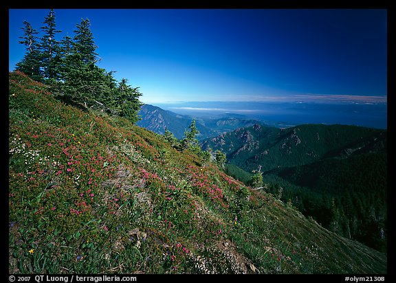 Looking towards the Strait of San Juan de Fuca from Hurricane hill. Olympic National Park (color)