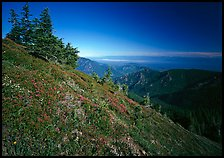 Looking towards  Strait of San Juan de Fuca from Hurricane hill. Olympic National Park ( color)
