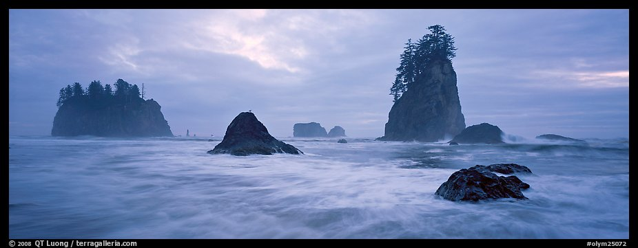 Misty seascape with sea stacks. Olympic National Park (color)