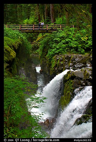 Sol Duc waterfall and bridge. Olympic National Park (color)