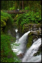 Sol Duc waterfall and bridge. Olympic National Park, Washington, USA. (color)