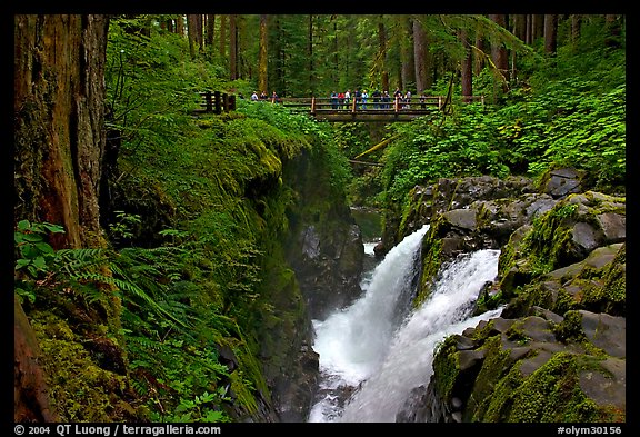 Soleduc falls and bridge. Olympic National Park (color)