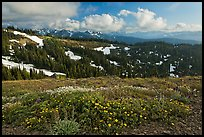 Wildflowers, hills, and Olympic mountains. Olympic National Park, Washington, USA. (color)