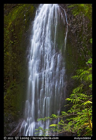 Marymere Falls, summer. Olympic National Park (color)