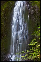 Marymere Falls, summer. Olympic National Park ( color)