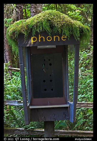 Phone booth covered by moss. Olympic National Park (color)
