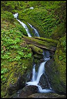 Merriman Falls. Olympic National Park, Washington, USA. (color)