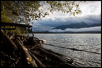 Lake Quinault from July Creek. Olympic National Park ( color)
