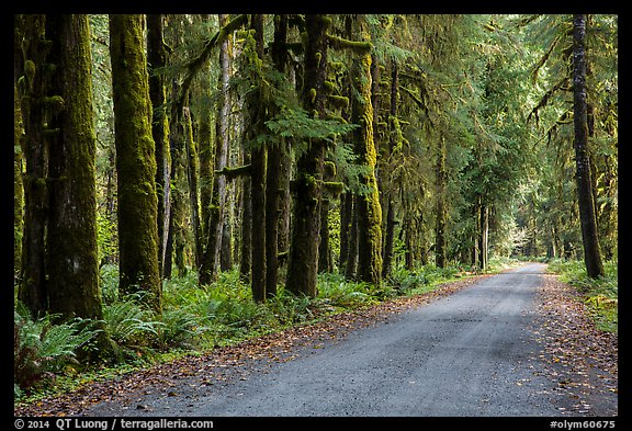 Unpaved road, Lake Quinault North Shore. Olympic National Park (color)