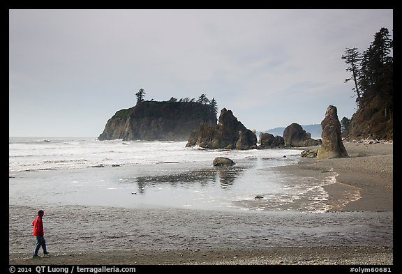 Visitor looking, Ruby Beach. Olympic National Park (color)