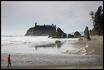 Visitor looking, Ruby Beach. Olympic National Park ( color)