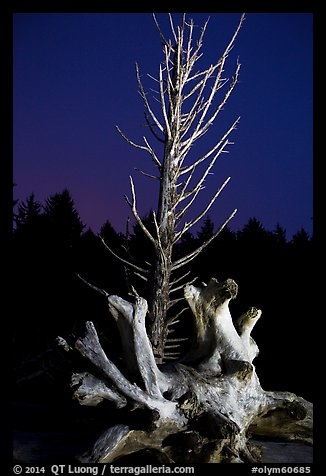 Driftwood and dead tree at night, Rialto Beach. Olympic National Park (color)