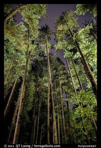 Tall coastal forest at night, Mora. Olympic National Park (color)