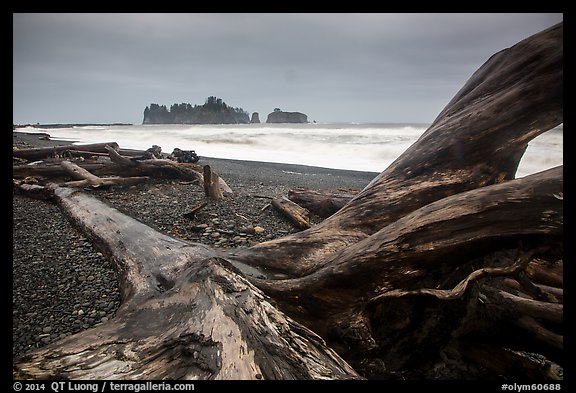 Driftwood and sea stacks in stormy weather, Rialto Beach. Olympic National Park (color)