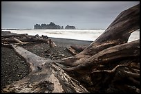 Driftwood and sea stacks in stormy weather, Rialto Beach. Olympic National Park ( color)