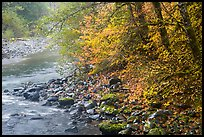 Trees in autumn foliage near Sol Duc River confluence. Olympic National Park ( color)