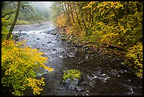 Confluence of North Fork and Sol Duc River in autumn. Olympic National Park ( color)