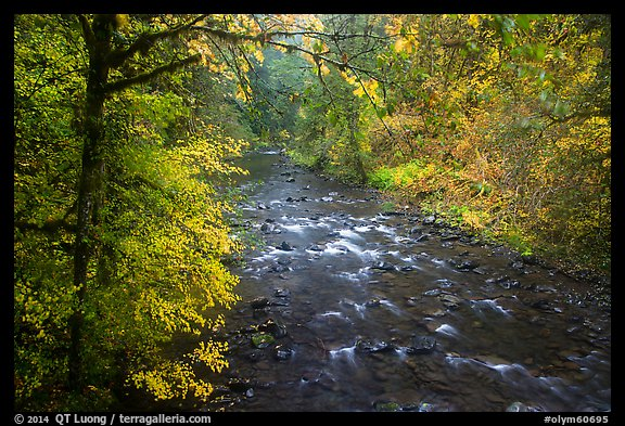 North Fork of Sol Duc River in autumn. Olympic National Park (color)