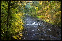 North Fork of Sol Duc River in autumn. Olympic National Park ( color)