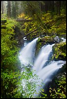 Sol Duc Falls and bridge in autumn. Olympic National Park ( color)