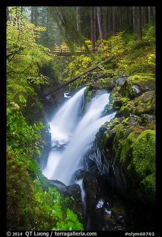 Soleduc Falls and footbridge in autumn. Olympic National Park (color)