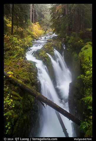 Soleduc Falls dropping into narrow gorge in autumn. Olympic National Park (color)