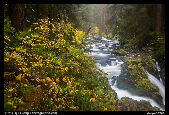 Sol Duc River in autumn. Olympic National Park (color)