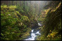 Gorge of Sol Duc River in autumn. Olympic National Park ( color)