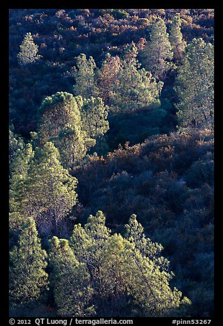Trees and Mediterranean chaparral. Pinnacles National Park (color)