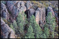 Rhyolitic rocks amongst pine trees. Pinnacles National Park, California, USA. (color)