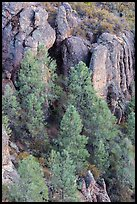 Pine trees and igneous rocks. Pinnacles National Park, California, USA. (color)
