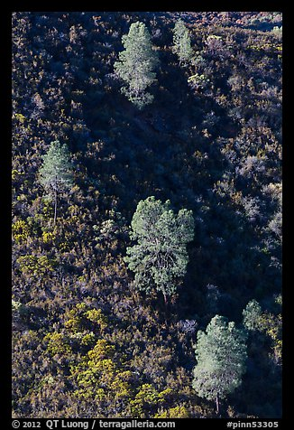 Trees and chapparal-covered slope. Pinnacles National Park (color)