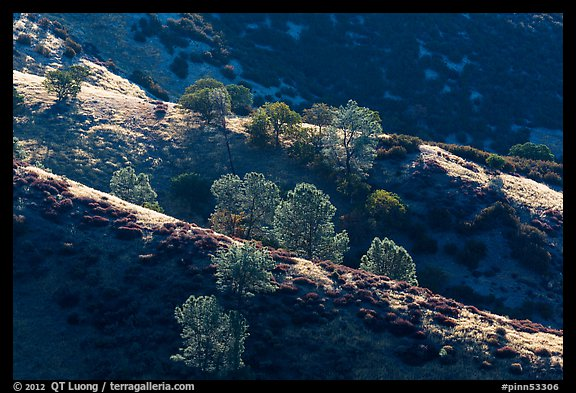 Trees on backlit ridges. Pinnacles National Park (color)