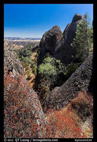 Dried wildflowers, trees, and pinnacles. Pinnacles National Monument, California, USA (color)