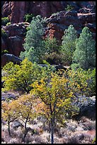 Trees and cliffs in late summer, Bear Gulch. Pinnacles National Park, California, USA. (color)
