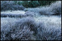 Winter frost on grasslands. Pinnacles National Park, California, USA. (color)
