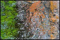 Green moss and orange lichen on rock wall. Pinnacles National Park, California, USA. (color)