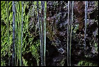 Icicles and moss, Balconies Cave. Pinnacles National Park, California, USA.
