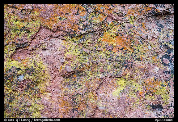 Multicolored lichen and rock. Pinnacles National Park (color)